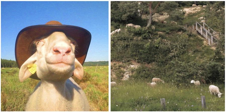 8 octobre 2021 – Journée Pastoralisme francilien